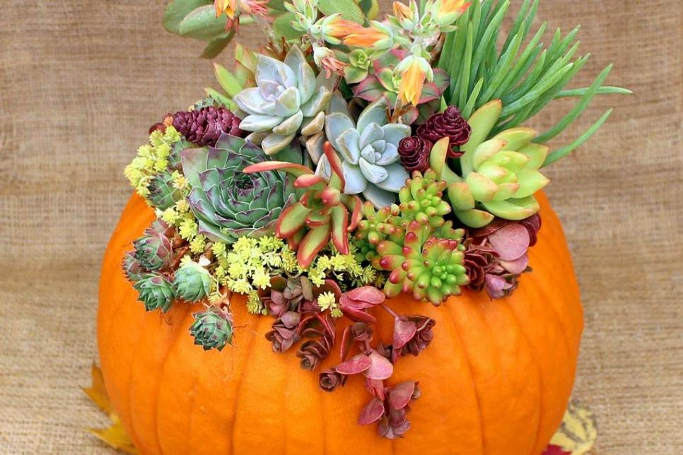 Current Obsession Diy Pumpkin Succulents Aka Pumpkulents