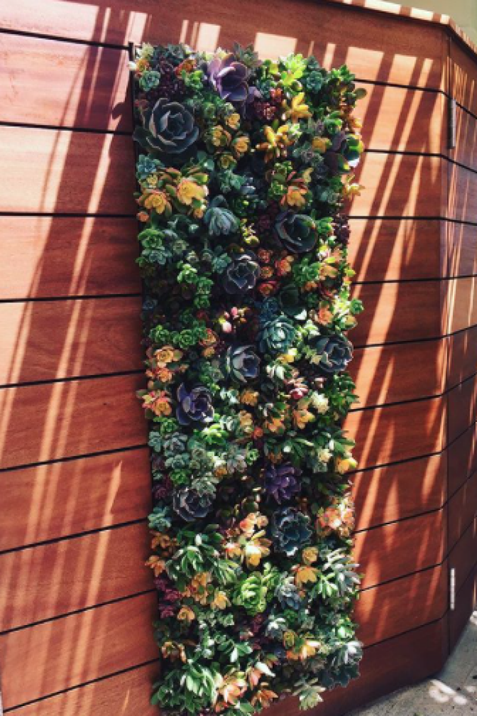 16 Stunning Succulent Gardens To Inspire Your Own Living Wall